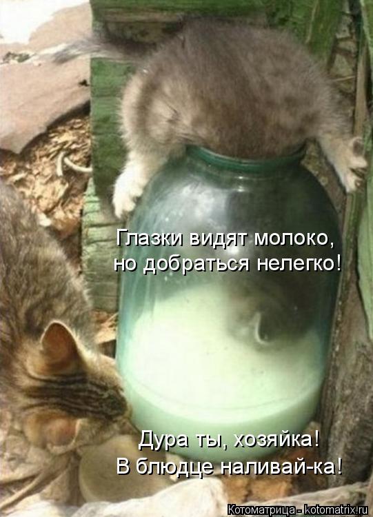 Котоматрица: Глазки видят молоко,  но добраться нелегко! Дура ты, хозяйка! В блюдце наливай-ка!