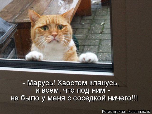 Котоматрица: - Марусь! Хвостом клянусь, и всем, что под ним -  не было у меня с соседкой ничего!!!