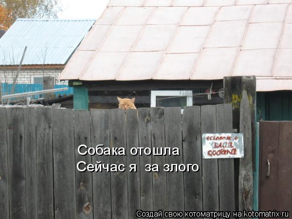 Котоматрица: Сейчас я  за злого Собака отошла