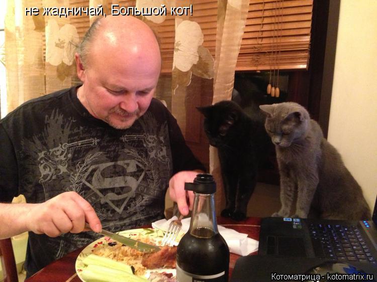 Котоматрица: не жадничай, Большой кот!