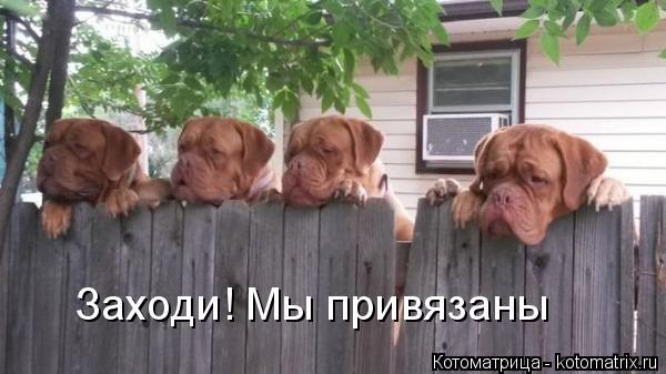 Котоматрица: Заходи! Мы привязаны