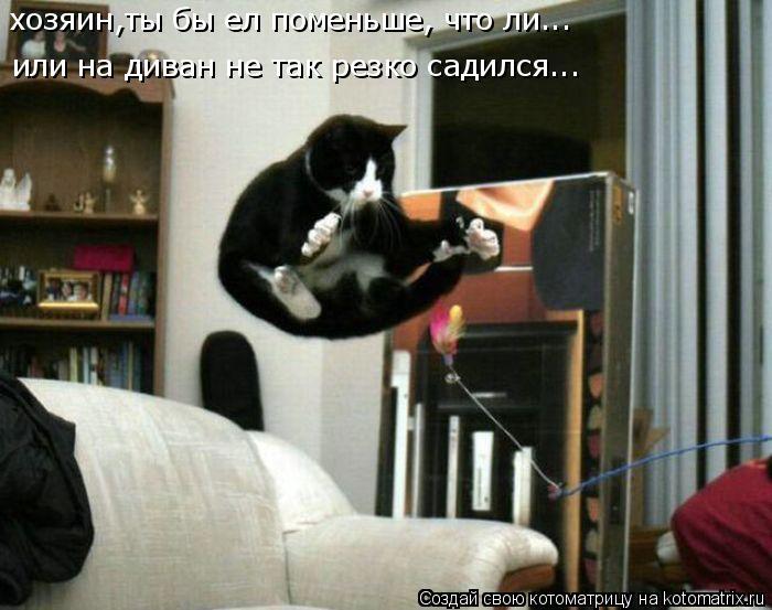 Котоматрица: хозяин,ты бы ел поменьше, что ли... или на диван не так резко садился...