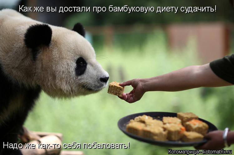 Котоматрица: Как же вы достали про бамбуковую диету судачить!  Надо же как-то себя побаловать!
