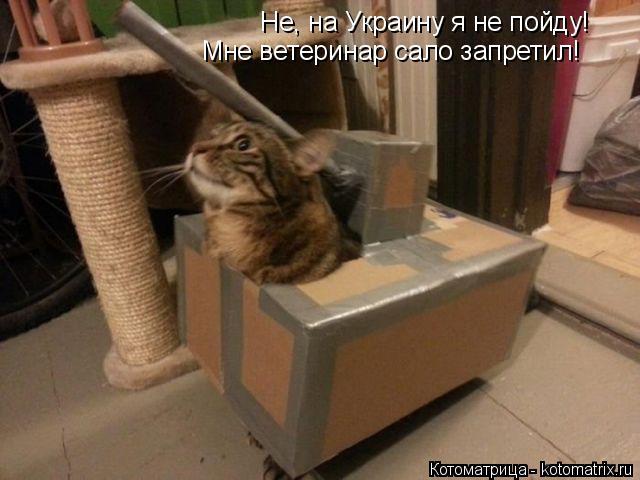 Котоматрица: Не, на Украину я не пойду! Мне ветеринар сало запретил!