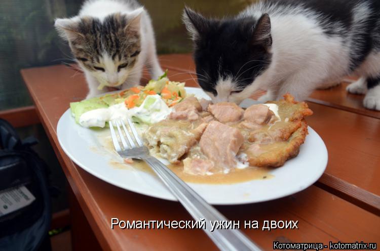 Котоматрица: Романтический ужин на двоих