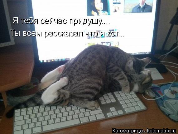 Котоматрица: Я тебя сейчас придушу.... Ты всем рассказал что я кот...