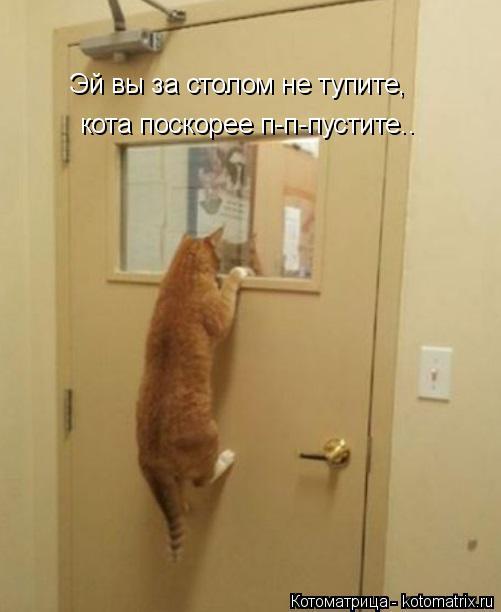 Котоматрица: Эй вы за столом не тупите, кота поскорее п-п-пустите..