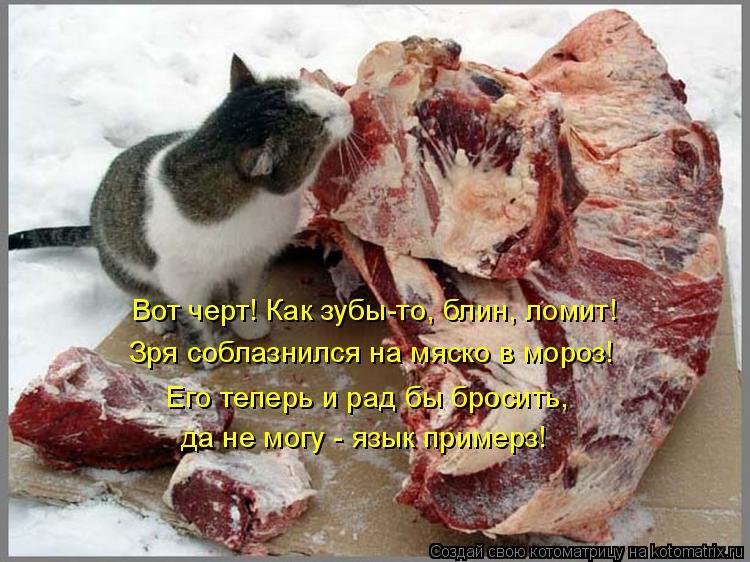 Котоматрица: Вот черт! Как зубы-то, блин, ломит! Зря соблазнился на мяско в мороз! Его теперь и рад бы бросить, да не могу - язык примерз!