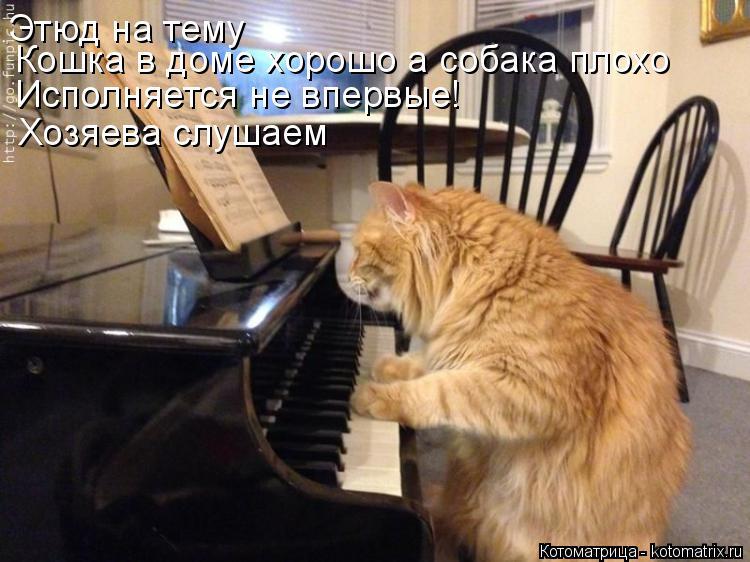 Котоматрица: Этюд на тему  Кошка в доме хорошо а собака плохо Исполняется не впервые! Хозяева слушаем