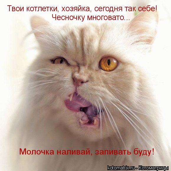 Котоматрица: Твои котлетки, хозяйка, сегодня так себе! Чесночку многовато... Молочка наливай, запивать буду!