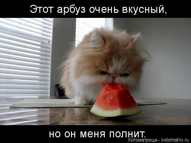 Котоматрица: Этот арбуз очень вкусный, но он меня полнит.