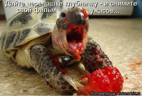Котоматрица: Дайте черепашке клубничку - и снимите свой фильм ужасов...