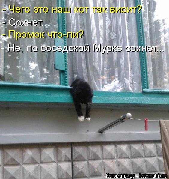 Котоматрица: - Чего это наш кот так висит? - Сохнет... - Промок что-ли? - Не, по соседской Мурке сохнет...