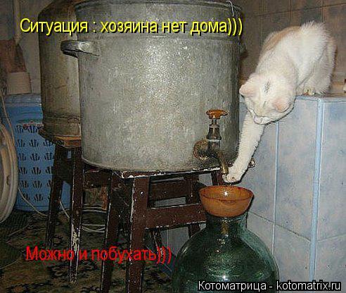 Котоматрица: Ситуация : хозяина нет дома))) Можно и побухать)))