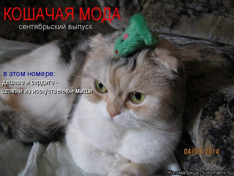 Котоматрица: КОШАЧАЯ МОДА в этом номере: сентябрьский выпуск дешево и сердито -  шляпки из исскуственной мыши