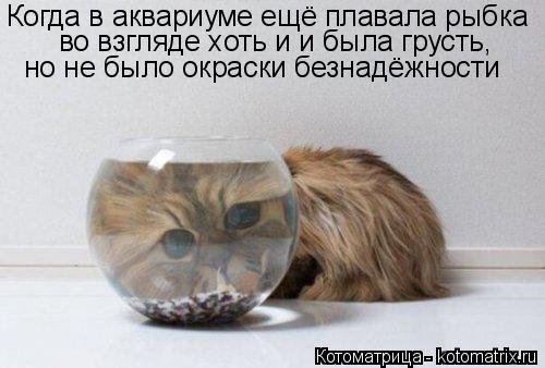 Котоматрица: Когда в аквариуме ещё плавала рыбка во взгляде хоть и и была грусть, но не было окраски безнадёжности