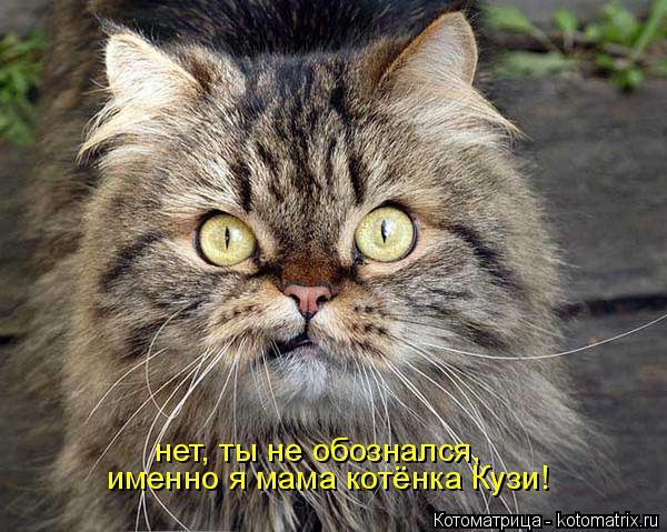 Котоматрица: именно я мама котёнка Кузи! нет, ты не обознался,