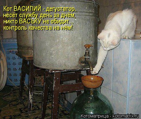 Котоматрица: Кот ВАСИЛИЙ - дегустатор, несёт службу день за днём, никто ВАСЬКУ не обидит... контроль качества на нём!