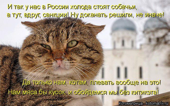 Котоматрица: И так у нас в России холода стоят собачьи, а тут, вдруг, санкции! Ну доканать решили, не иначе! Да только нам, котам, плевать вообще на это! Нам