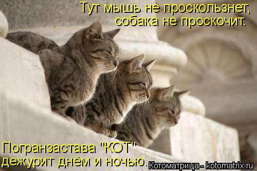 """Котоматрица: Тут мышь не проскользнет, собака не проскочит. Погранзастава """"КОТ"""" дежурит днём и ночью."""
