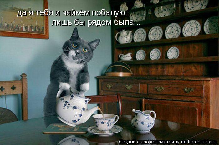 Котоматрица: да я тебя и чяйкём побалую... лишь бы рядом была...