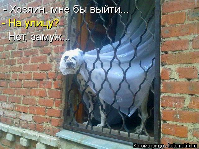 Котоматрица: - Хозяин, мне бы выйти... - На улицу? - Нет, замуж...