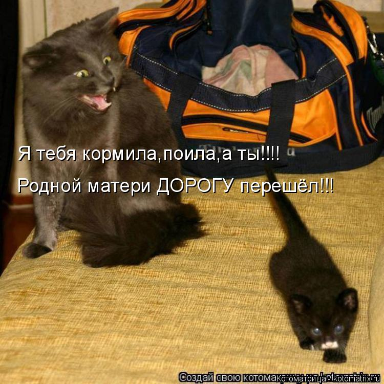 Котоматрица: Я тебя кормила,поила,а ты!!!! Родной матери ДОРОГУ перешёл!!!