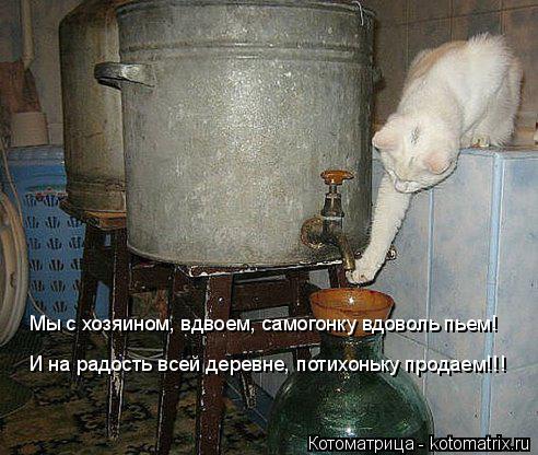 Котоматрица: Мы с хозяином, вдвоем, самогонку вдоволь пьем! И на радость всей деревне, потихоньку продаем!!!