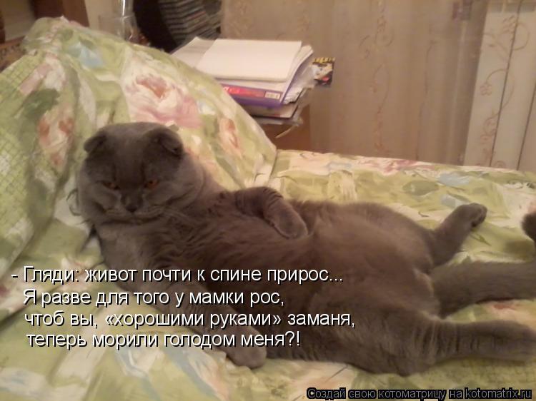 Котоматрица: - Гляди: живот почти к спине прирос... Я разве для того у мамки рос, чтоб вы, «хорошими руками» заманя, теперь морили голодом меня?!