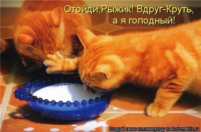 Котоматрица: Отойди,Рыжик! Вдруг-Круть, а я голодный!