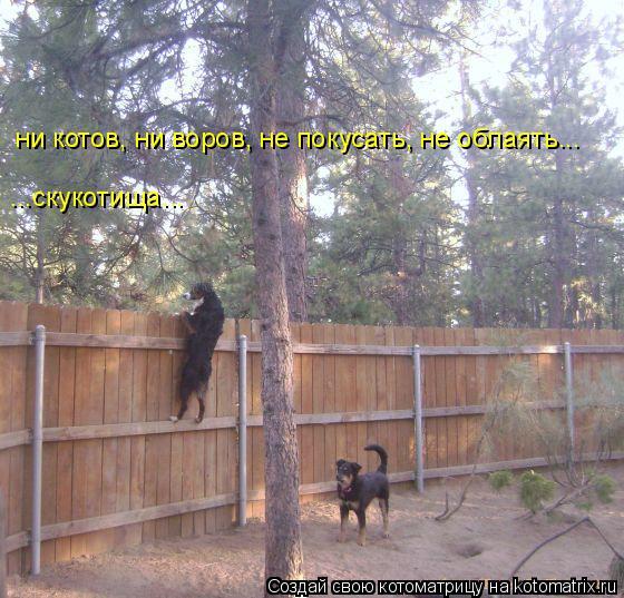 Котоматрица: ни котов, ни воров, не покусать, не облаять... ...скукотища...