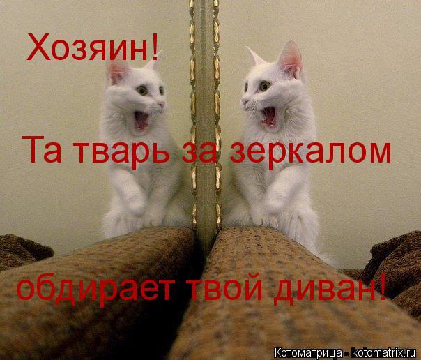 Котоматрица: Хозяин!  Та тварь за зеркалом обдирает твой диван!