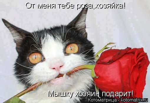 Котоматрица: От меня тебе роза,хозяйка! Мышку хозяин подарит!