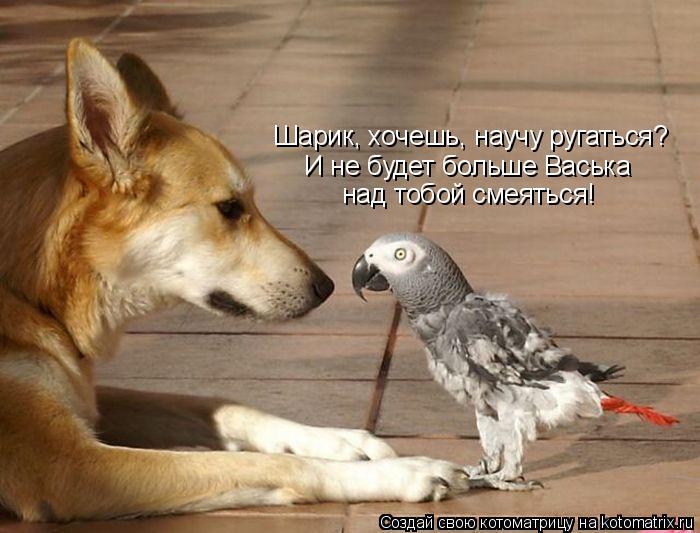 Котоматрица: Шарик, хочешь, научу ругаться? И не будет больше Васька над тобой смеяться!