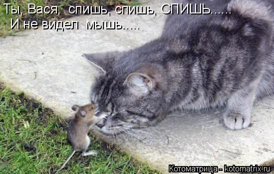 Котоматрица: Ты, Вася,  спишь, спишь, СПИШЬ......  И не видел  мышь.....