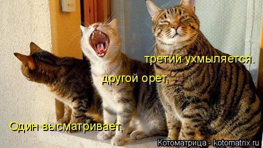 Котоматрица: Один высматривает, другой орет, третий ухмыляется.
