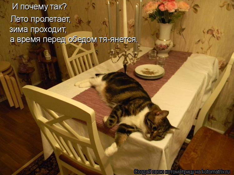 Котоматрица: И почему так? Лето пролетает, зима проходит, а время перед обедом тя-янется.