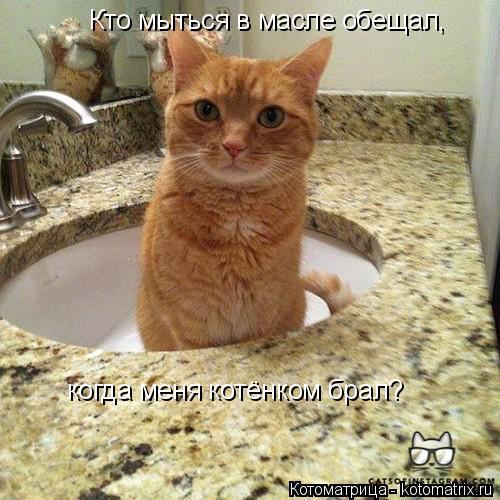 Котоматрица: Кто мыться в масле обещал, когда меня котёнком брал?