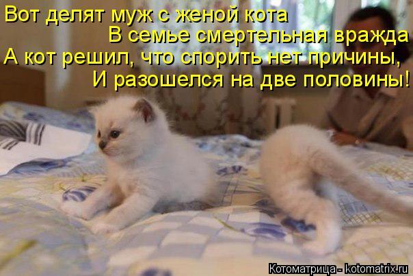Котоматрица: Вот делят муж с женой кота В семье смертельная вражда А кот решил, что спорить нет причины, И разошелся на две половины!