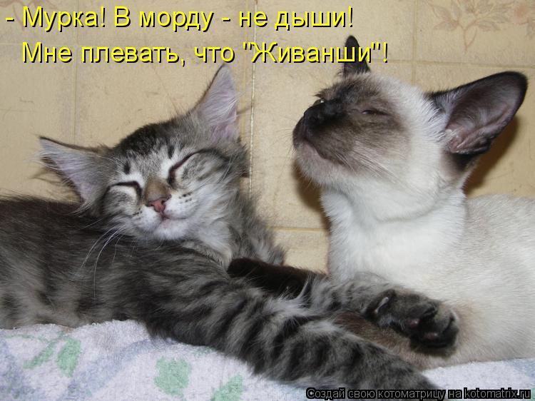 """Котоматрица: - Мурка! В морду - не дыши! Мне плевать, что """"Живанши""""!"""
