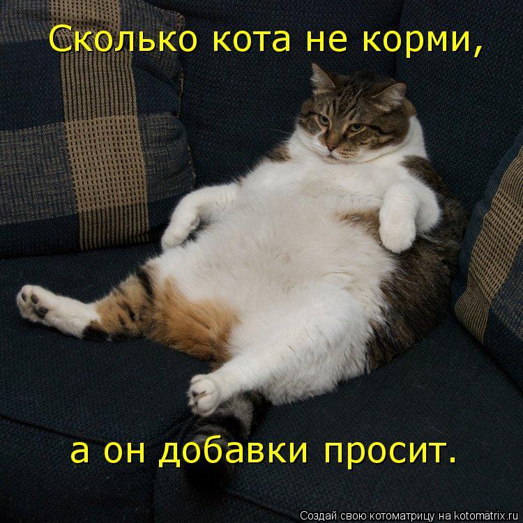 Котоматрица: Сколько кота не корми, а он добавки просит.