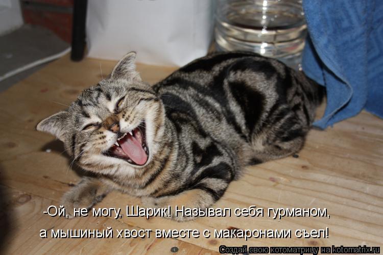 Котоматрица: -Ой, не могу, Шарик! Называл себя гурманом,  а мышиный хвост вместе с макаронами съел!