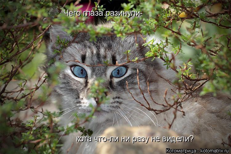 Котоматрица: Чего глаза разинули- кота что-ли ни разу не видели?