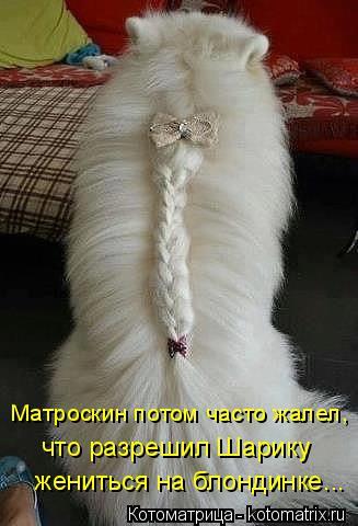 Котоматрица: Матроскин потом часто жалел, что разрешил Шарику жениться на блондинке...