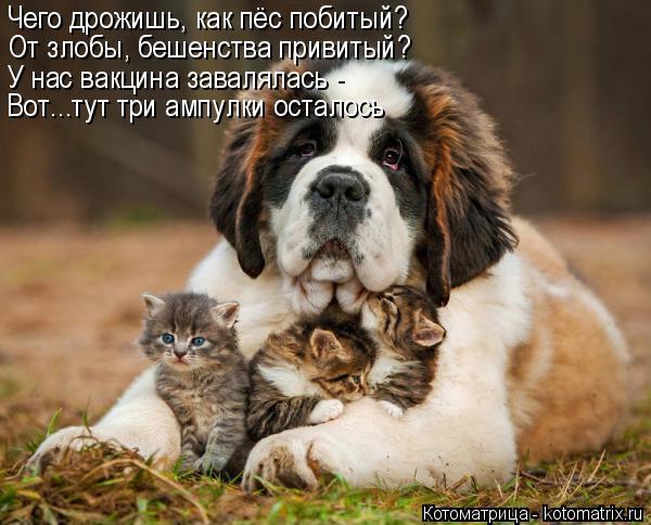 Котоматрица: Чего дрожишь, как пёс побитый? От злобы, бешенства привитый? Вот...тут три ампулки осталось У нас вакцина завалялась -