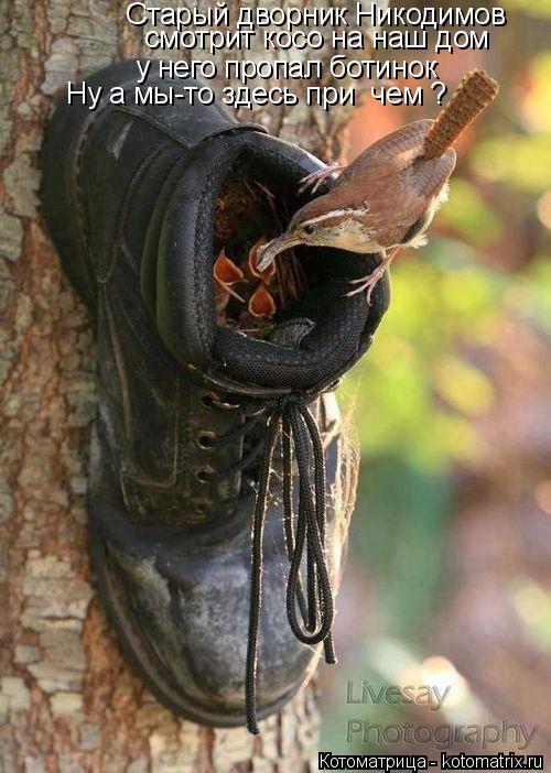 Котоматрица: Старый дворник Никодимов  смотрит косо на наш дом  у него пропал ботинок  Ну а мы-то здесь при  чем ?