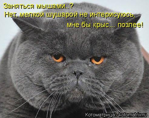 Котоматрица: Заняться мышами..?  Нет, мелкой шушарой не интерисуюсь,  мне бы крыс... позлее!