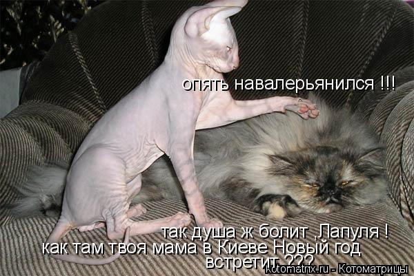 Котоматрица: опять навалерьянился !!! так душа ж болит ,Лапуля ! как там твоя мама в Киеве Новый год  встретит ???