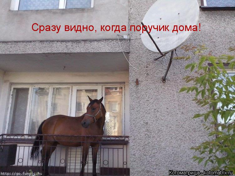 Котоматрица: Сразу видно, когда поручик дома!