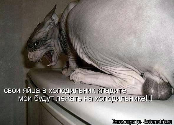 Котоматрица: свои яйца в холодильник кладите мои будут лежать на холодильнике!!!